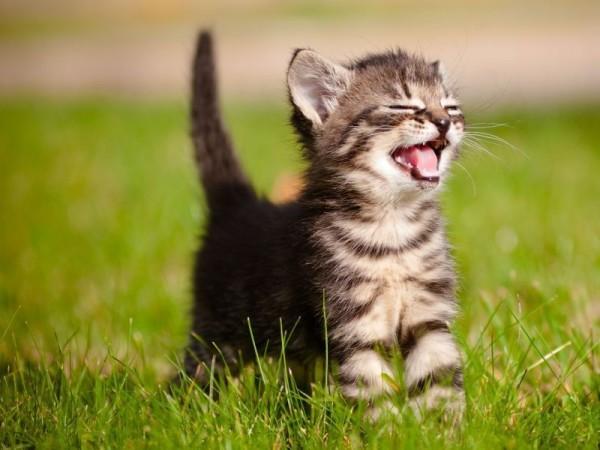 Junge-Katze-Erziehen